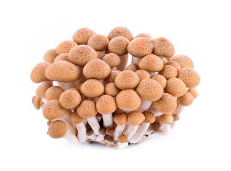 hon: shimeji mushrooms brown varieties on white background