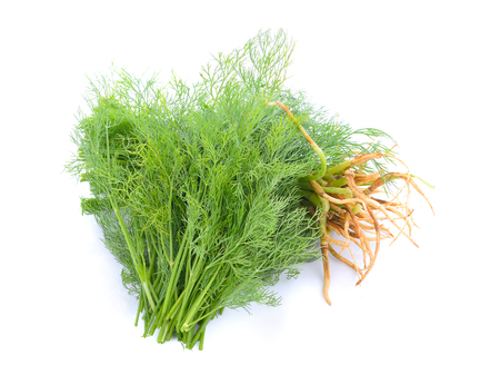 Coriander bunch isolated on white background