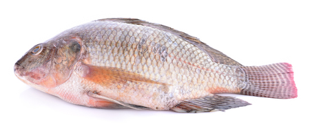 Fresh tilapia isolated on white background.