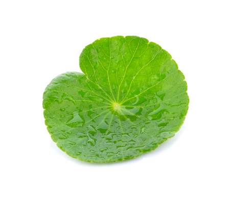 Fresh Green Asiatic pennywort on white background Stock Photo