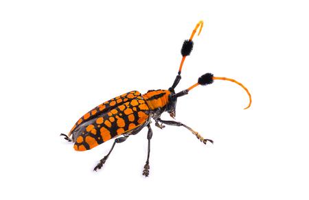 Orange insects isolated on white background.