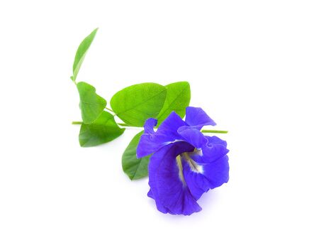 Pea flower isolated on white background.