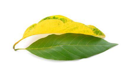 Leaves on a white background Фото со стока