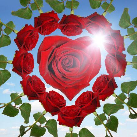 Natural rose from botanical garden Banque d'images - 140621266