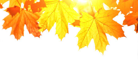 Beautiful autumn background with yellow and red leaves.