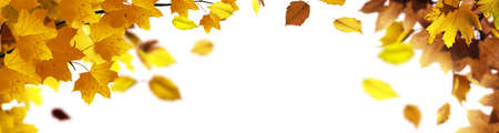 Beautiful autumn background with yellow and red leaves. 版權商用圖片