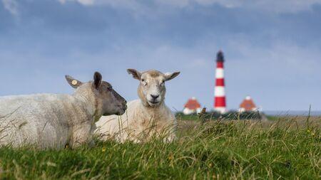westerheversand lighthouse: Westerhever Lighthouse Stock Photo
