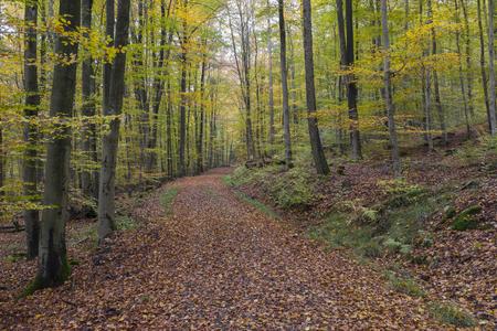 Autumn forest in Germany Stok Fotoğraf
