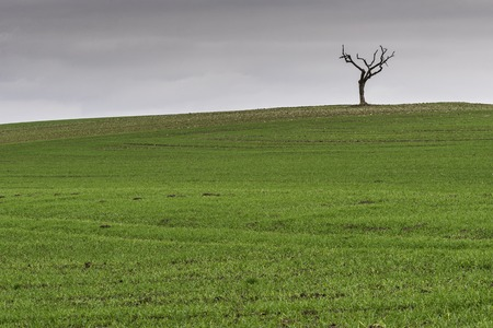 Lonely tree in an open field in Lower Saxony