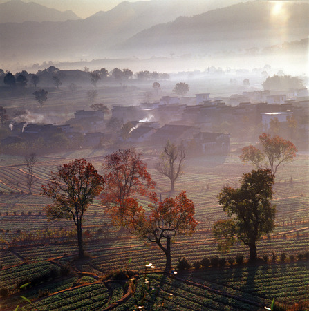 Trees With Red Leaves On Farmland Of Ancient Villages LANG_EVOIMAGES