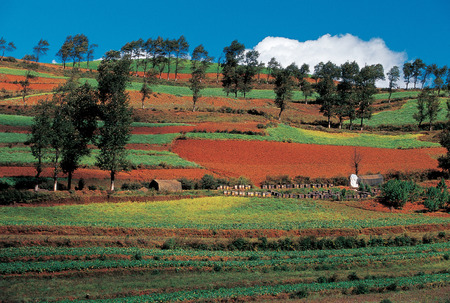 Overlook Of Red Soil And Trees, Dongchuan, Yunnan LANG_EVOIMAGES