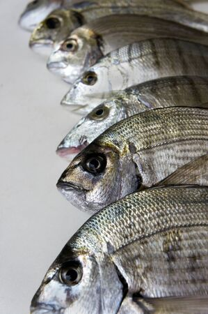 fished: Fresh fishes that have been just fished, in studio