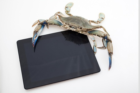 Blue crab holding a tablet isolated on white background under studio lights Stock Photo - 17236436