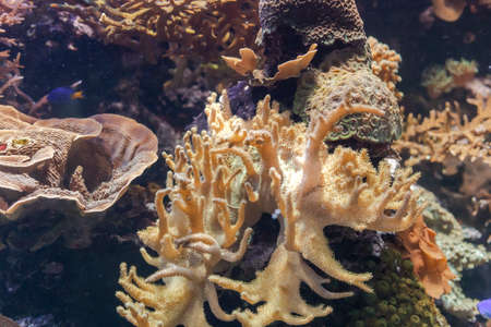 Coral reef ecosystem in an aquarium