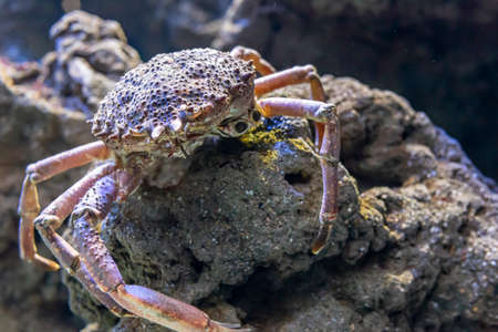 Spider crab with many legs less Banco de Imagens