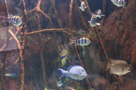 Tropical fishes in an aquarium fish tank Banco de Imagens