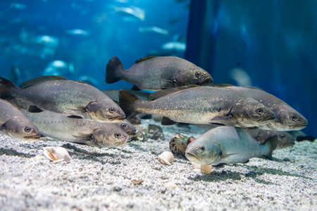 Many fishes in the aquarium