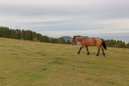 A brown wild horse in the nature Banco de Imagens