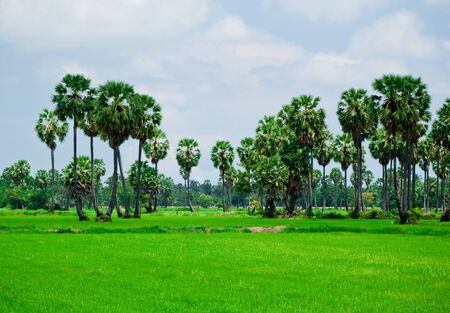 group of palm tree in countryside Stock Photo