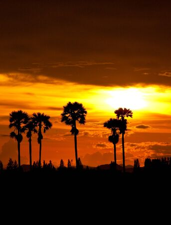 sunset at palm tree on south of thailand Stock Photo