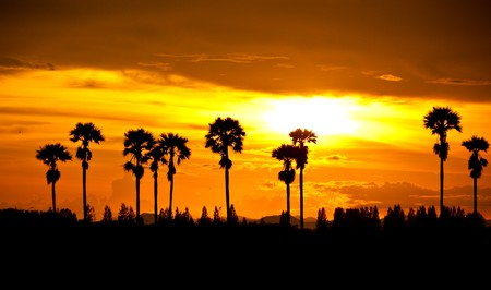 sunset at palm tree on south of thailand photo
