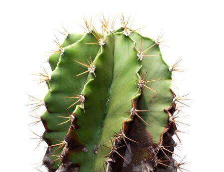 close up of cactus or desert flora