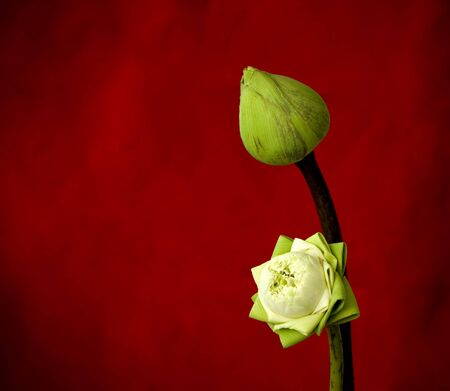 two green lotus on red background