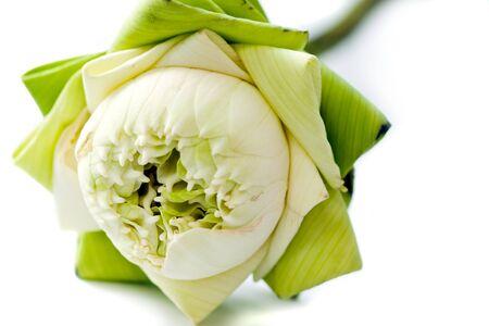 close-up of green lotus petal Stock Photo