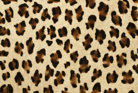 fake tiger skin that made from leather Stock Photo - 15904388