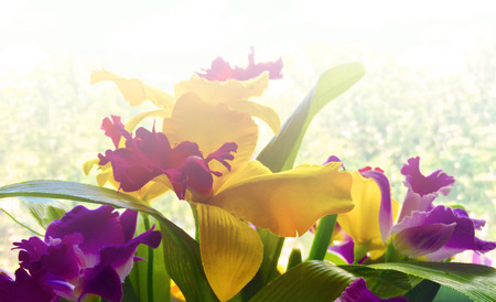 colorful handcraft textile made as group of orchid flower
