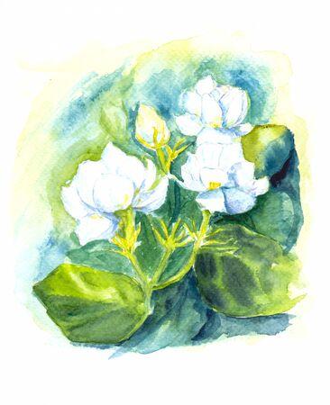 jasmine flower of water color painting art
