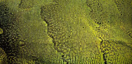 close: Close up Skin texture of iguana