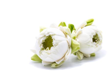 white lotus flower on white background
