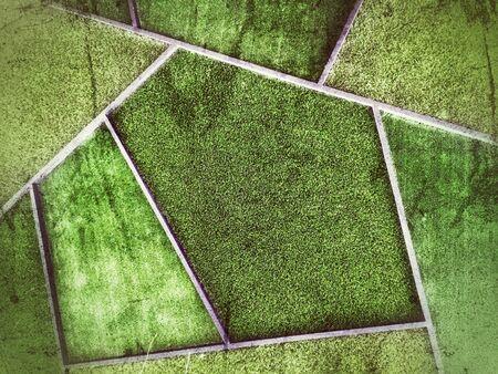 Green grass turf texture