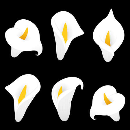Calla lilly vector illustration. Decorative floral elements.