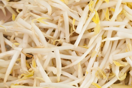 Close up of Bean Sprouts Stock Photo - 13198184