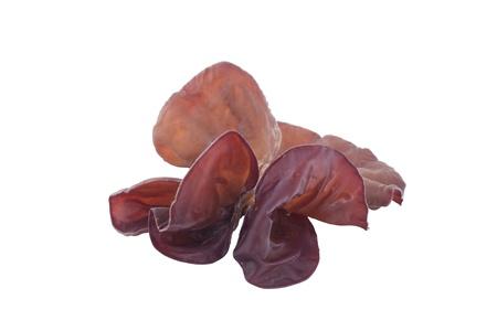 Jews Ear Mushroom on white background