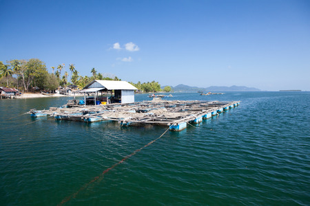 Fishes underwater fish cage farming or floating basket for keeping live fish in water