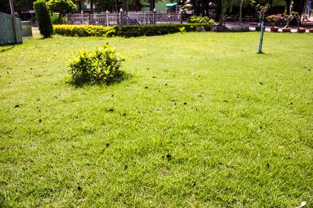 lawn area: Bush green central lawn area Playa Garden . Stock Photo