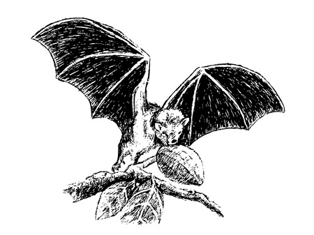 believed: This is my hand drawing . Fruit bats are believed to carry and spread the Ebola virus