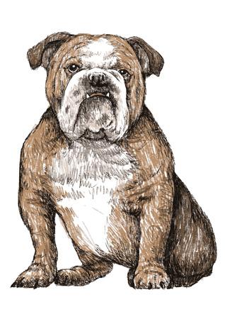 Bulldog handgetekende Stock Illustratie