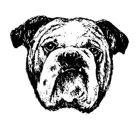 Black and white bulldog , hand draw vector.