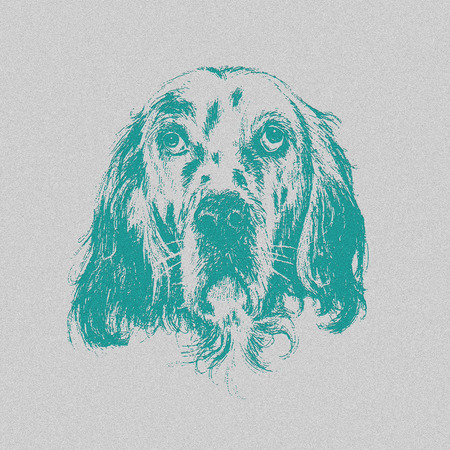 bas relief: Head of English setter on grained grey background