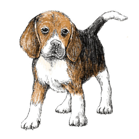 obedient: Image of beagle , hand draw vector.