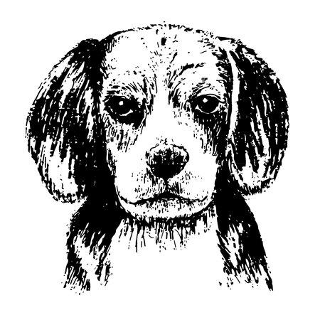 beagle puppy: Blanco y negro del beagle, drenaje de la mano de vectores.