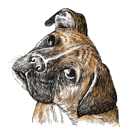 Image of Boxer , hand drawn vector.