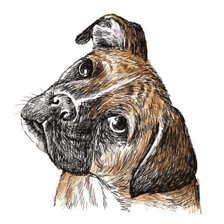 Afbeelding van Boxer, met de hand getekende vector. Stockfoto - 32517486