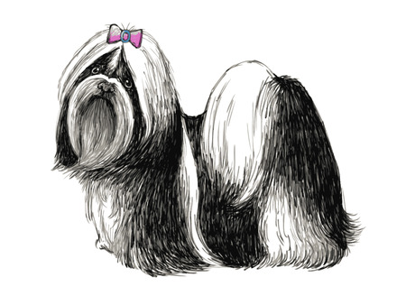 puppy isolated: Image of Shih tzu , hand drawn vector.