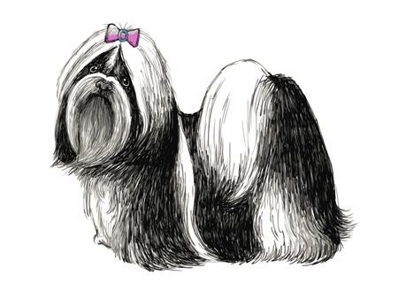 shih: Image of Shih tzu , hand drawn vector.