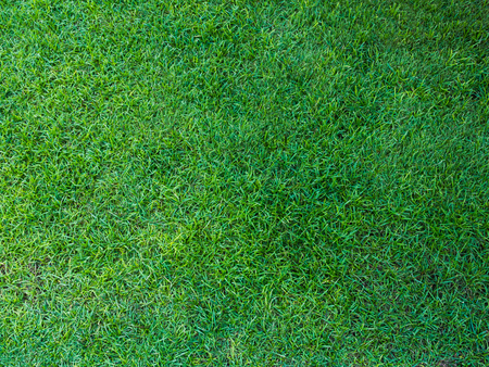 cut grass: Green meadow grass field , use for background